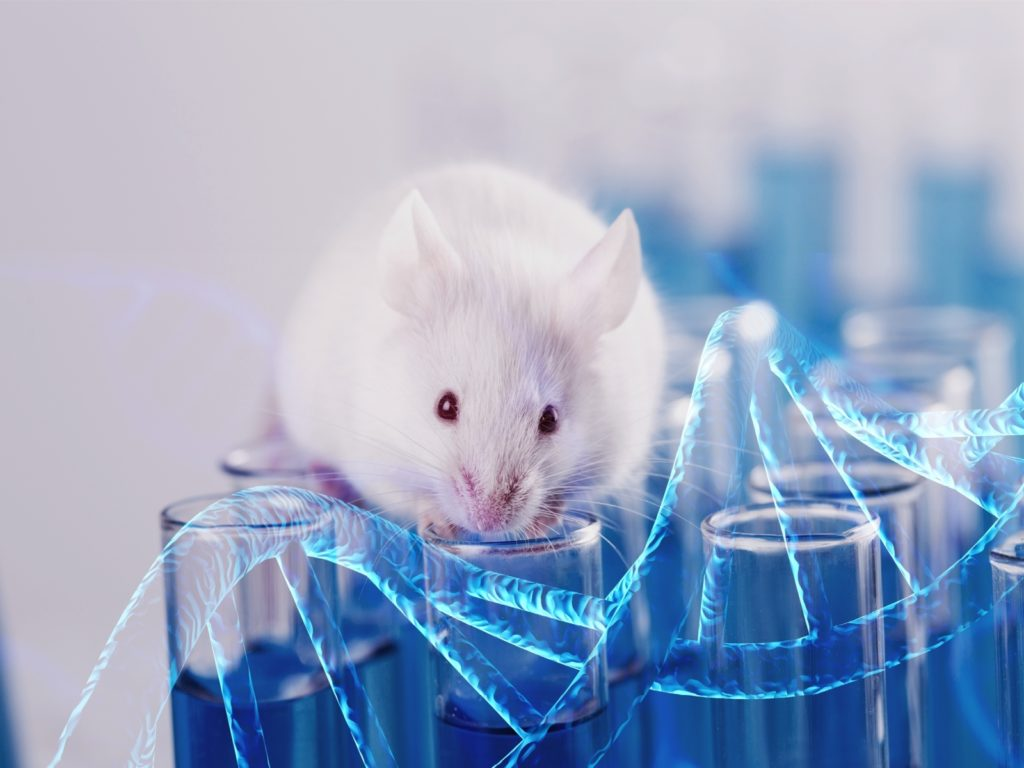 Mouse hybridoma development